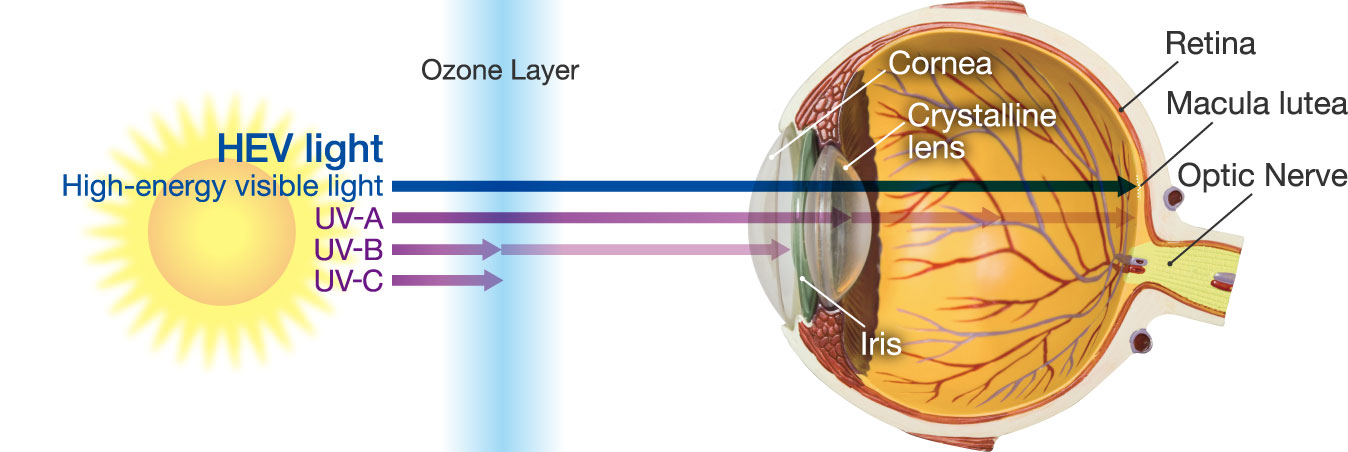 Illust.: HEV light passes through the cornea and lens
